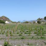 Vulcano18 150x150 - Kalabrien | Bilder einer Reise