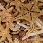 kalabrien bild 809 150x150 - Kalabrien Bilder Galerie